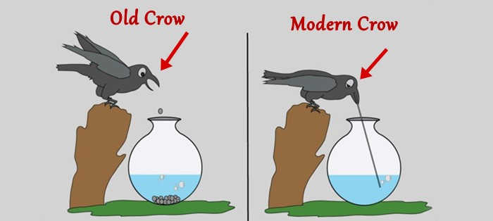 Old crow and modern crow