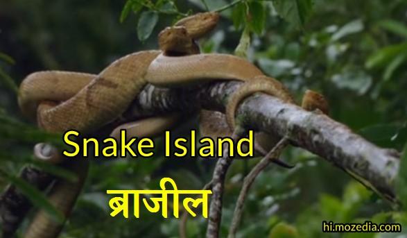 Snake Island, सांप द्वीप, ब्राजील