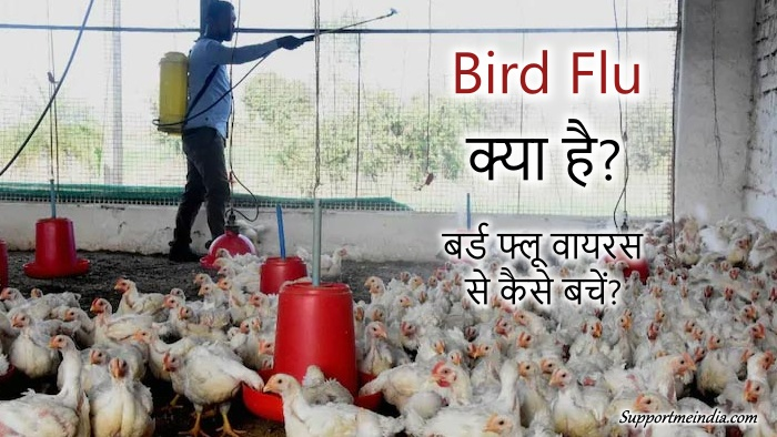 Bird Flu Virus Kya hai or Isse kaise bache